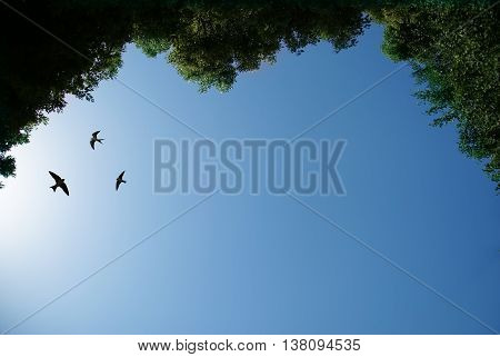 Free flying birds swallow on blue sky background