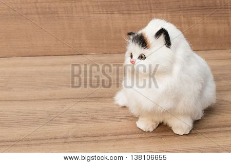 doll white cat close up on wooden background