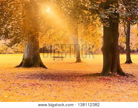 Idyllic park scene in autumn, with sunray falling through the tree tops.