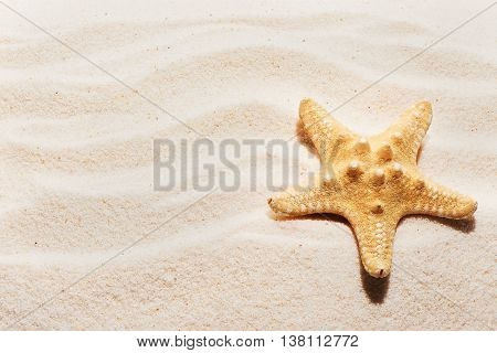 Starfish On Sand With Marks Of Waves. Summer Beach Background