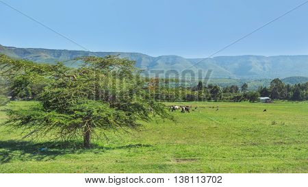 Farm Animals Grazing In A Field