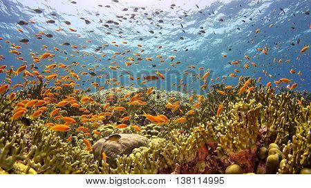 .tropical Fish On Vibrant Coral Reef