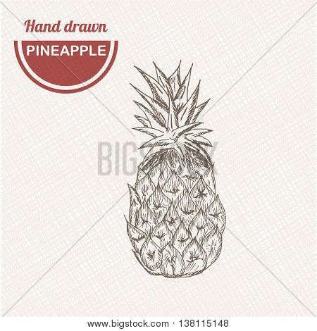 Sketches pineapple composition. Hand drawn pineapple. Vintage sketch style illustration.