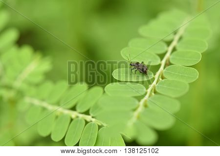 closeup bug insect on green leaf for nature background.
