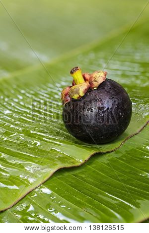 Fresh Mangosteen On Banana Leaf, Queen Of Fruit In Thaland