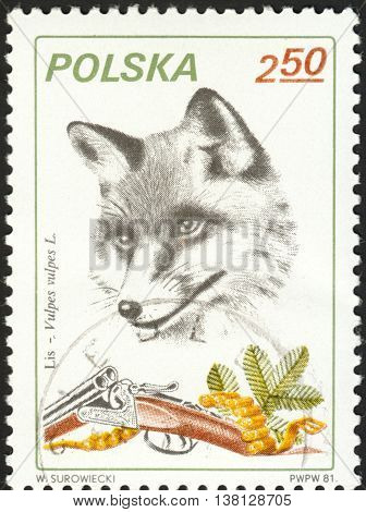 MOSCOW RUSSIA - DECEMBER 2015: a post stamp printed in POLAND shows a fox with the inscription