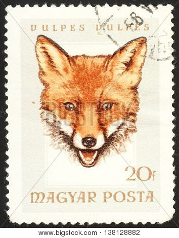 MOSCOW RUSSIA - DECEMBER 2015: a post stamp printed in HUNGARY shows a fox (vulpes vulpes) the series