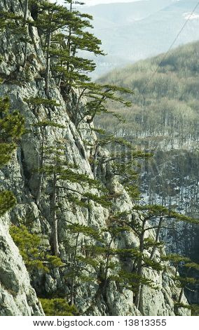Stone and pines in Crimean mountain