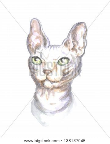 head of the sphinx cat. Image of a thoroughbred cat. Watercolor painting.