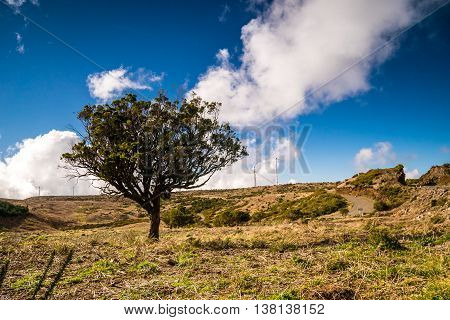 Green Tree On Plateau In Madeira, Portugal