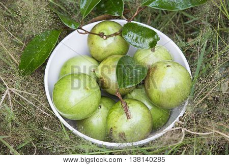star apple ripe fruit in a bowl on the grass
