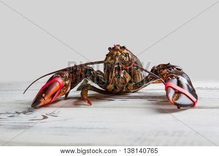 Front view of raw lobster. Lobster on white wooden surface. Natural camouflage of sea creature. You can't hide from me.
