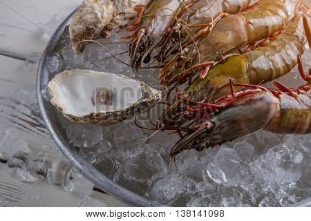 Shrimps and seashells. Shrimps on ice beside seashells. Crustacean served at local restaurant. Chef will do his best.