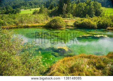 Zelenci - Sava River Spring In Forest