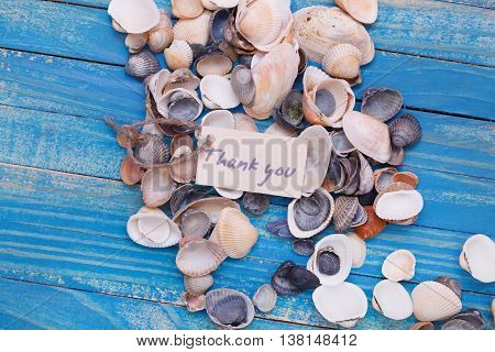 Sea Shells With A Sign - Thank You