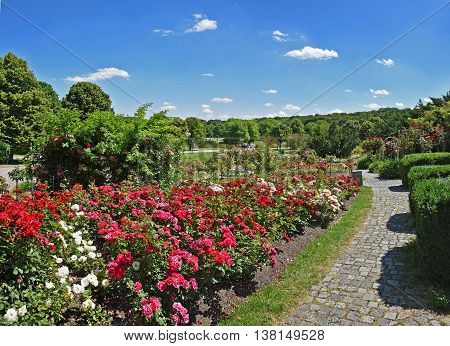 Beautiful City Park With Rose Flowerbed And Walkway, Munich West Park