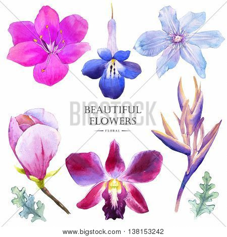 Watercolor collection of blue flowers magnolia strelitzia and clematis. Handmade painting on a white background.