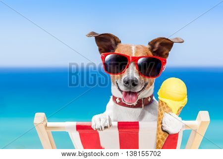 Dog Summer Beach