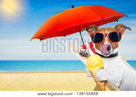 Dog Beach Chair