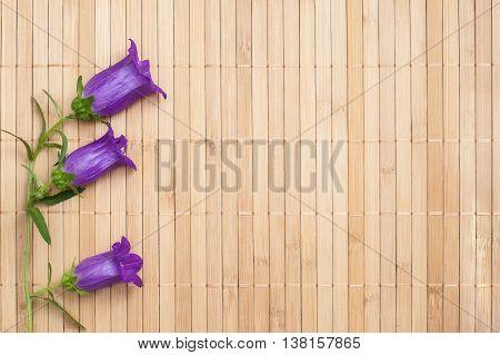 Ultramarine colored bellflower on beige bamboo napkin copyspace