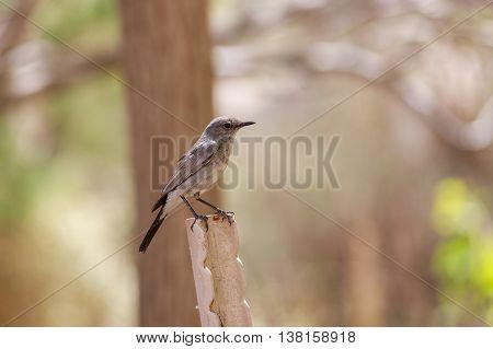 Beautiful gray bird on a iron angle