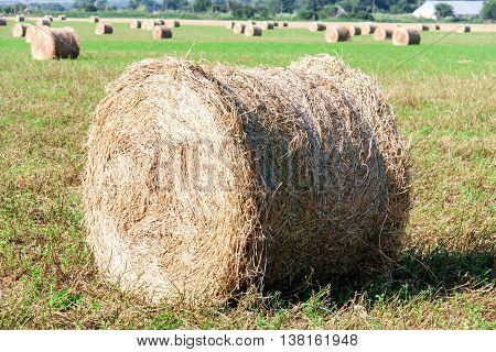 Summer Field with Hay Bale as background.