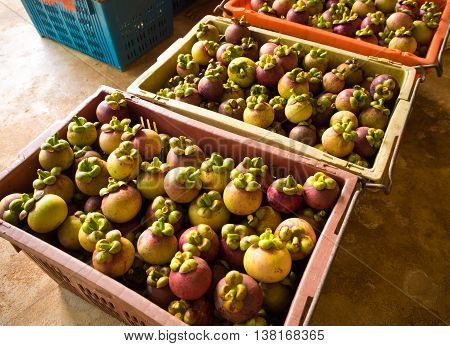 Mangosteen in Plastic basket Selected to Export
