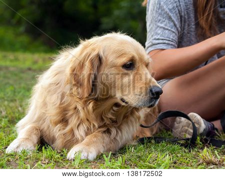 the girl in a gray jacket and shorts, with long brown hair sits on a grass in park, the dog breed a golden retriever sits next