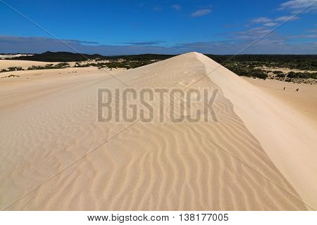 High sand hill ridge with blue sky at Little Sahara white sand dune system on Kangaroo Island, South Australia