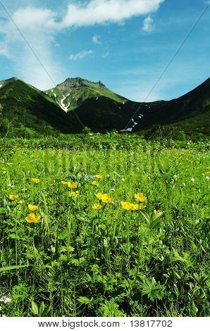 Blumen Wiese auf Kamtschatka