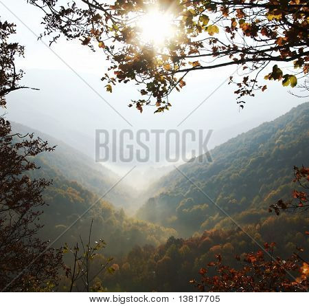 Yellow autumn forest in mountain