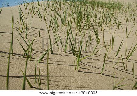 Green grass in sand desert