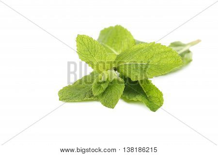 Fresh Mint Leaf Isolated On A White