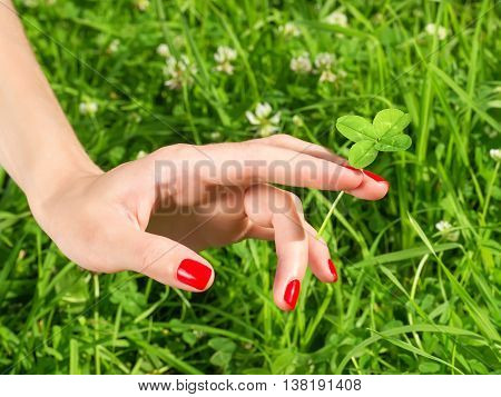 Beautiful female hand with red nail holding four leaf clover. Against green grass background