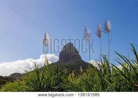 Piton De La Petite With Sugarcane Blossom Mountain In Mauritius