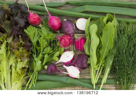 fresh vegetables, radishes, lettuce, green onions, dill and sorrel