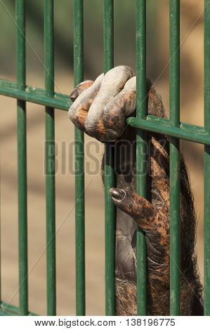 close up of ape hand holding green cage grill