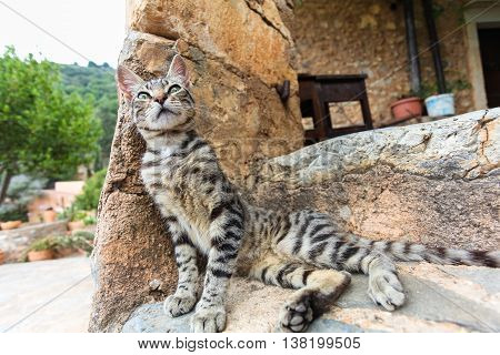 Young cat on stone stairs at home. Island Crete. Greece