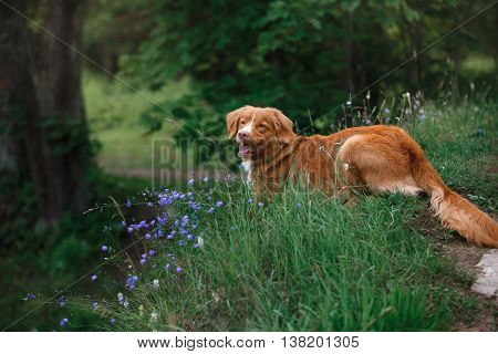 Dog In Flowers In A Park On The Nature