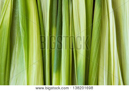 Green corn leaves. Closeup. Copyspace Topview background