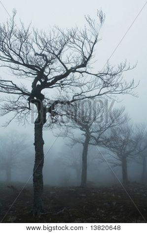 Zauberwald von nebligen