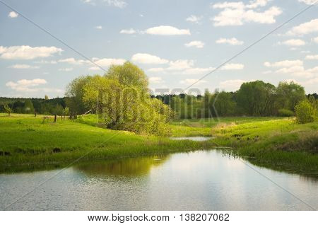 Forest lake and summer time. Nature composition.