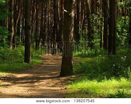 deep into the shadowed forest. Nature composition.