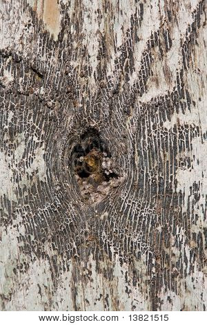 Knothole In A Tree