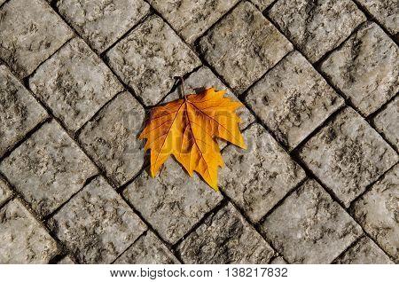 Autumn golden orange maple laef lying on the city cobblestone, autumn vintage hipster seasonal background