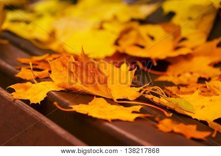 Autumn maple leaf lying on the wooden bench, seasonal fall natural background