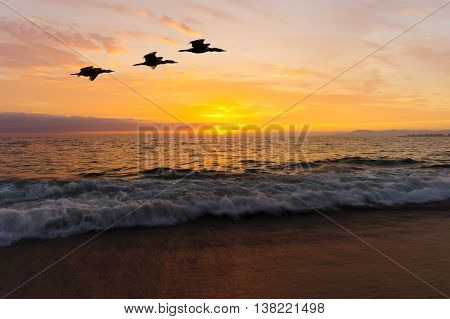 Birds silhouettes is two large seabirds flying agains a vivid and colorful ocean sunset as a gentle wave rolls to shore.