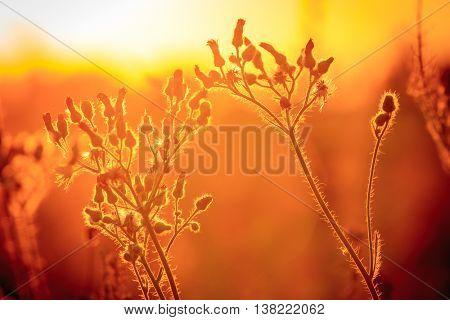 summer flower meadow against sunset light