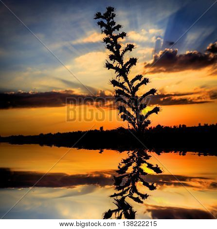 abstract plant with water reflection on sunset sky background