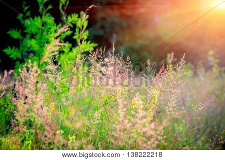 Dry grass on summer meadow against  sunset background
